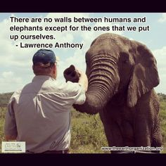 We are all connected. #truth #fact #lawrenceanthony #elephants #harmony #peace #majestic #beautiful