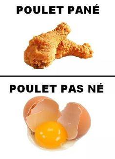 Du bon poulet pas né... image drole humour
