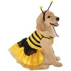 Köpek arı kostümü