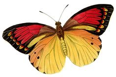 Butterfly Clip Art | Butterfly Clipart Graphics Code | Butterfly Clipart Comments ...