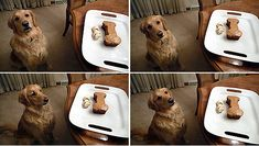 a dog and a cake