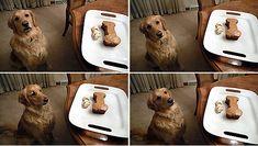 Dog Birthday cake with recipe.