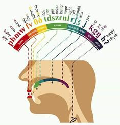 Knowledge Chop 📚 A map of the human mouth where each word is preformed Tag-or-DM-a-Friend to chop them with knowledge. See Website for references and full size images. Speech Language Therapy, Speech Language Pathology, Speech And Language, Speech Therapy, Phonetisches Alphabet, Phonetic Alphabet, English Alphabet, Alphabet Symbols, Science Diagrams