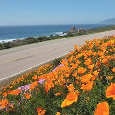 Anyone else feel like they could lie in these flowers for hours?   Spring is my favorite time to drive the California coast. The hills are a deep green and our state flower the Golden Poppy blankets the coastline in bright orange.  #girlstrip #roadtrip #wanderlust #california @visitcalifornia @visitca by theblondeabroad