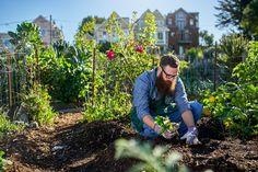 Urban Gardening – die natürlichste Sache der Welt – ist längst kein Trend mehr, sondern vielmehr eine globale Bewegung geworden. Die Idee des Gemeinschaftsgärtens zur partizipativen Selbstversorgung stammt aus den USA und findet heute in Ballungsräumen auf der ganzen Welt eine breite Anhängerschaft. Ob in Moskau, wo über die Hälfte der Stadtbewohner zumindest einen Teil […]