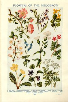 healing flowers: