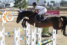 Qrack de la Love - 10 years Arc the triunfe x Shogun II  #equestrian #horse #horses #horsejump #competition #equine #chile #equitacion #horserider #showjumping #mijas #españa #spain #costadelsol #equestriantour #autumncup