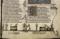 Two Scenes of Winemaking From the and Century 14th Century, Illuminated Manuscript, Basket Weaving, Renaissance, Medieval, Oxford, University, Illustration, Agriculture