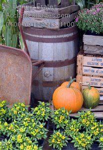 Fall...old barrel, rusty wheelbarrow, worn wooden crates, &...pumpkins & mums.