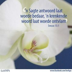 Lééf Hart, Printable Quotes, Afrikaans, Lisa, Life Quotes, Language, Printables, Inspirational, Quote Life