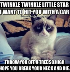 I love grumpy cat he is so funny