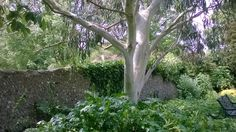 Easthill walled garden portslade