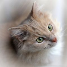 The face of an angel by Helen Haden on 500px