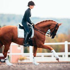Comfort Zone, Dressage, Horses, History, Animals, Instagram, Animaux, Animales, Horse