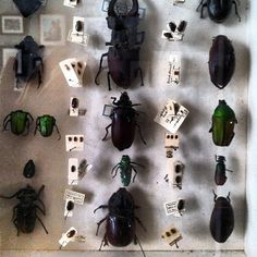 Our House - Beetles.
