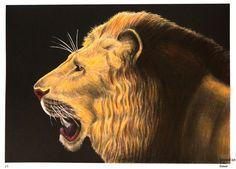 Tim Jeffs -  Intricate Ink Animals in Details volume 1   Lion   Coloured with Derwent Coloursoft pencils