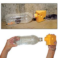 1000 images about mole vole animal ideas on pinterest mice mouse traps and empty plastic - Volle trap ...