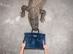 A hole lot of money: The celebrity photographer says the highly-coveted crocodile skin bag...