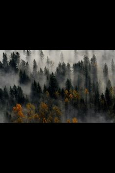 European beech and alpine forest