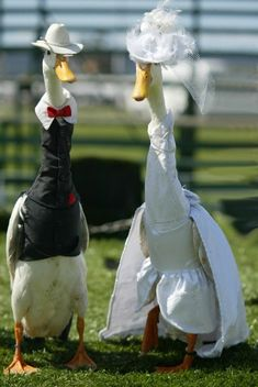 fashion-parade-for-ducks-13