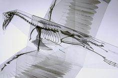 Origami y rayos X, una original denuncia ambiental