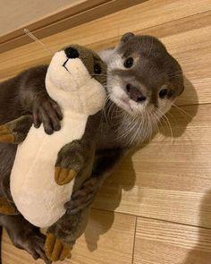 Baby Animals Super Cute, Cute Little Animals, Cute Funny Animals, Cute Cats, Otters Cute, Baby Otters, Fluffy Animals, Animals And Pets, Cute Animal Pictures