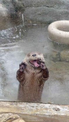 """Look at my happy daaaance!"" 