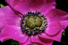 Anemone by Tiger Seo on 500px