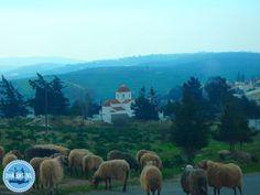 05-Informationen-uber-Griechenland Village Festival, Heraklion, Crete Greece, Uber, Fields, Greek, Island, Park, Beautiful