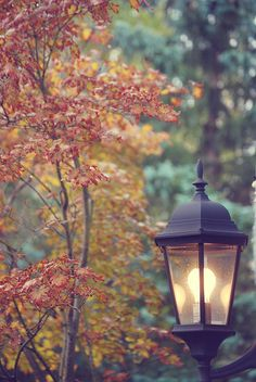 Lighting the way towards Fall