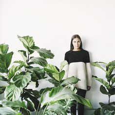 Winning combo = our Edie alpaca sweater + all the fiddle leaf figs #erlumedie (Link in profile)