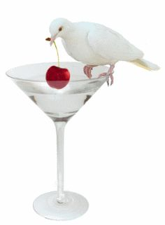 A white dove pulls a cherry out of a martini glass. Beautiful Love Pictures, Beautiful Gif, Love Images, Beautiful Roses, Beautiful Things, Gifs Lindos, Perfect Martini, Les Gifs, Beautiful Flowers Wallpapers