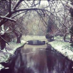 A winter stroll in Roath Park, Cardiff