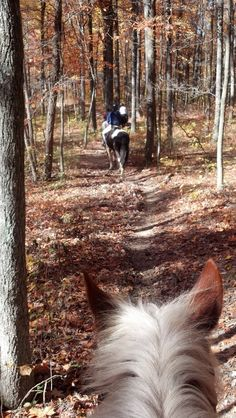 In October we took horses and camped in Brown County State Park's Horseman's Camp, cooked on camp fires, road trails, had wonderful week in the beautiful color.