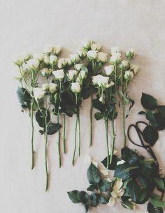 romantic white roses