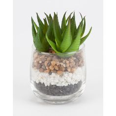 Spiky Succulent Plant (9.08 CAD) ❤ liked on Polyvore featuring home, home decor and floral decor