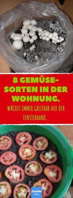 8 Gemüse- Sorten in der Wohnung #Gemüse #Wohnung #Selbstversorger #Tomaten #Pilze #Salat #Wohnzimmer #Fensterbank #Paprika #Nachziehen #Zwiebeln #Wasserglas