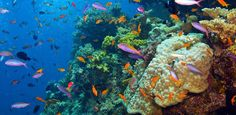 The Great Barrier reef Ultimate Travel Bucket List via @PureWow