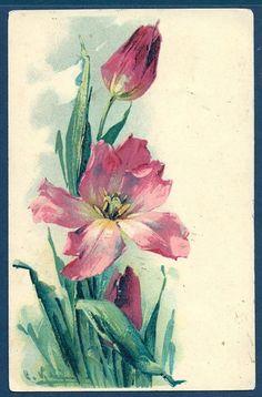 Tulips Catherine Klein Postcard