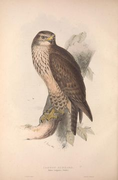 v. 1 - The birds of Europe. - Biodiversity Heritage Library