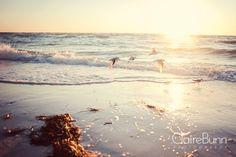 Anna Maria Island, Florida  2012   Claire Bunn Photography