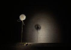 #Still #Life #Photography Одиночество…© kdvadim