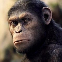 Caesar from Rise of the Planet of Apes