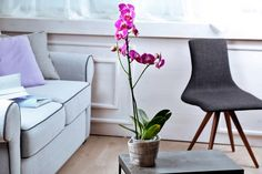 ako sa správne starať o orchidey v hrnci