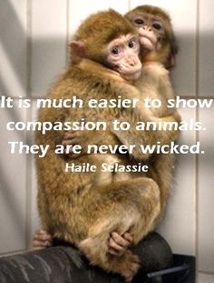 Animal quote by Haile Selassie. Photo: Gin and Morito, barbary macaques, in quarantine at AAP rescue center.
