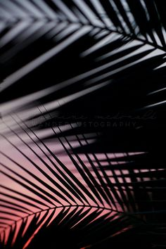 TITLE: Shade III DESCRIPTION: Palm Frond Abstract Photography. Printed without watermark on lustre paper by a professional lab at a major