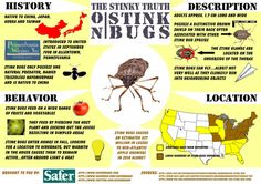 Everything you need to know about Stink Bugs!