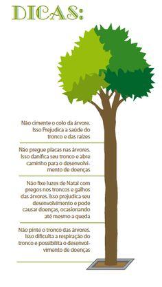 Cuidado com o plantio de árvores nas calçadas