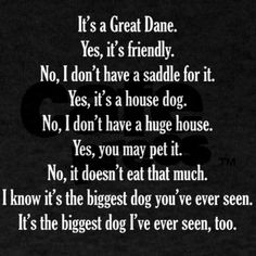 Find Out More On The Affectionate Great Dane Puppies Temperament Great Dane Dogs, I Love Dogs, Puppy Love, Great Dane Funny, Dane Puppies, Doggies, Adoption, Gentle Giant, Dog Houses