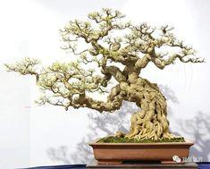 Bonsai Art, Bonsai Garden, Bonsai Trees, Stone Wallpaper, Traditional Art, Compost, Lily, Statue, Photography